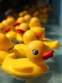 Постер, плакат: Duckies резины плавающей в игре карнавал