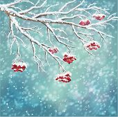stock photo of cold-weather  - Winter background with snow covered frozen tree branches rowan berry snowfall on watercolor backdrop - JPG