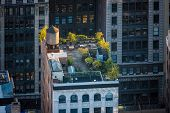 foto of brighten  - Aerial view of a lovely late afternoon light flooding a midtown roof garden in Chelsea Manhattan NYC - JPG