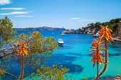 Cala Fornells View In Majorca