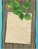 Old Paper On A Wooden Wall And Green Spring Leaves Of Birch. Background With Empty Space For Your Te