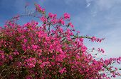 Flowering bush background blue sky