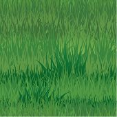 Seamless Pattern - Texture Of Grass - Background For Natural Or Eco Design. Ready To Use As Swatch.