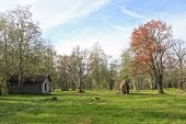 stock photo of log fence  - Meadow - JPG