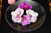pink and white orchid in a bowl on mat
