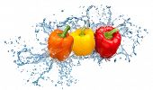 Pepper in spray of water. Juicy pepper with splash on white background