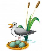 image of bird egg  - Illustration of a bird beside the nest with eggs on a white background - JPG