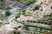 foto of jabal  - Image of landscape Saiq Plateau and terrace cultivation in Oman - JPG