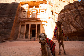 picture of camel-cart  - Camels in front of the facade of the Treasury one of the main monuments in Petra Jordan reached after a long walk through a canyon  - JPG