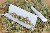 picture of joint  - Photo of dry marijuana buds with joint - JPG