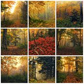 stock photo of mystique  - Collage made of images of fantasy autumn forest - JPG