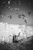 stock photo of flock seagulls  - man feeding seagulls on the seashore - JPG