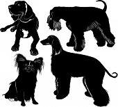 stock photo of foxhound  - greyhound mastiff Miniature Schnauzer chihuahua dog pet - JPG