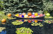 foto of lillies  - Colorful glass balls in a garden lake coverend in lilly pads - JPG