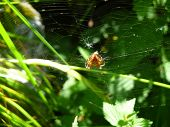 picture of spiderwebs  - A red spider is sitting in a spiderweb - JPG