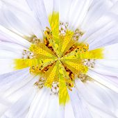 stock photo of symmetrical  - White Flower Center Symmetric Collage Made of Collection of Various Wildflowers - JPG