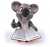 picture of koala  - Fun koala - JPG