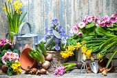 picture of tool  - Gardening tools and flowers in the garden - JPG