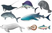 stock photo of swordfish  - Illustration of different kind of ocean creatures - JPG