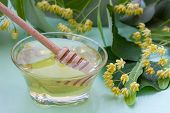 picture of linden-tree  - Linden honey with fresh lime flowers and drizzler  - JPG