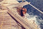 picture of nea  - Capture of a Happy bridal couple embracing nea sea - JPG