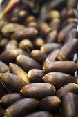 picture of acorn  - Acorns for acorn fed Iberian Spanish ham pig food Jamon Iberico de Bellota. ** Note: Soft Focus at 100%, best at smaller sizes - JPG