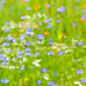 pic of pentecostal  - Abstract colorful nature impression - JPG