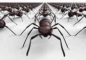 picture of ant  - black ants isolated on a white background - JPG