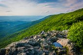 pic of virginia  - View from Crescent Rock in Shenandoah National Park Virginia - JPG