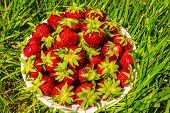 picture of strawberry  - juicy strawberry - JPG