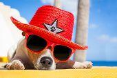 stock photo of sombrero  - jack russell dog resting sleeping a siesta under a palm tree on summer vacation holidays at the beach wearing sunglasses and a big hat sombrero - JPG