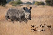 image of rhino  - Lone rhino standing on a open area looking for safety from with message - JPG
