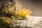 image of close-up shot  - Moss in a close up shot on the rock selective focus macro shot