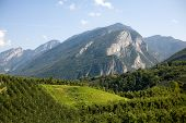 stock photo of apple orchard  - An image of apple orchards in the southern Alps - JPG