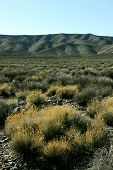 Golden Tumbleweeds Contrast With A Black Mountain Range, Death Valley, California, Usa