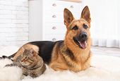 Adorable Cat And Dog Resting Together On Fuzzy Rug Indoors. Animal Friendship poster