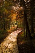Wooden Boardwalk Cuts Through A Dark Autumn Forest