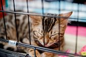 Cat Is In Cage For Transportation And Storage In Shelter, Airport, Travel. poster