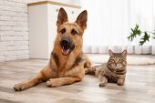 Adorable Cat And Dog Resting Together At Home. Animal Friendship poster