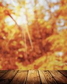 The Rays Of The Autumn Sun Shine Through The Leaves. Sunset. Bright Natural Background. Old Wooden T poster