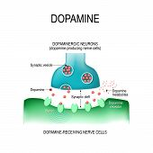 Dopamine. Two Neurons (dopamine-producing And Dopamine-receiving Nerve Cells),  Receptors, And Synap poster