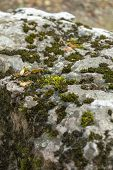 Green Moss Grows On Stones. Wild Nature. Moss On The Stones Close-up. The Texture Of The Stone. The  poster