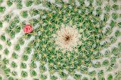 pic of cactus  - Closeup on cactus with single red flower against green cactus - JPG