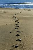 image of naturist  - A sandy beach on the sea  with footprints