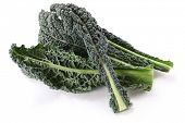stock photo of kale  - black kale - JPG