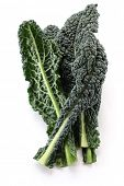picture of kale  - black kale - JPG