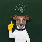 stock photo of clever  - smart and clever dog with a light bulb on blackboard - JPG