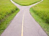 stock photo of divergent  - Fork in the road with two paths diverging - JPG