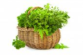 Collection of Fresh Spicy Herbs in Basket / isolated on white / thyme, basil, oregano, parsley, marj