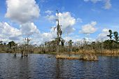 picture of bayou  - On the dark water of the bayou - JPG